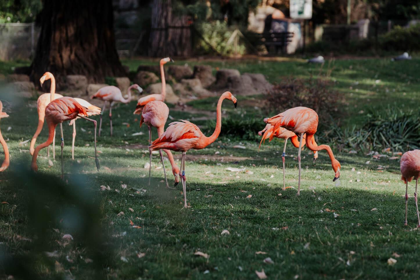 Hochzeit im Kölner Zoo