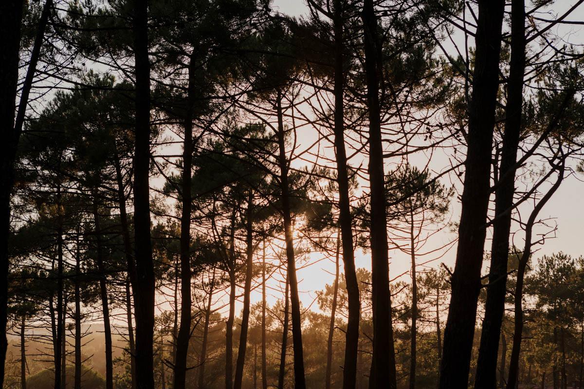 Pinien im Sonnenuntergang